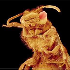 ΟΗΕ: Φάτε σκαθάρια, κάμπιες καιακρίδες!