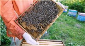 Μέλι απο τοΝεπάλ