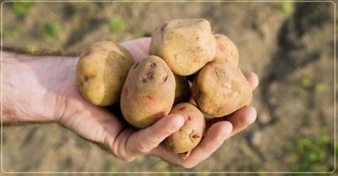 patata300