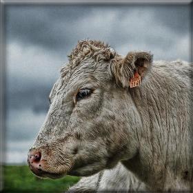 Απειλούν με μηνύσεις οικτηνοτρόφοι