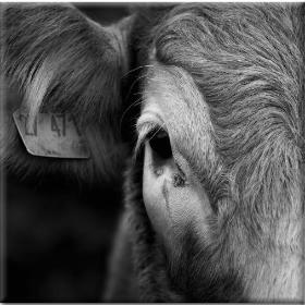 Διαμαρτυρίες κτηνοτρόφων για την πορεία τωνπληρωμών