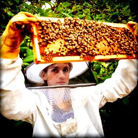 Οι ασθένειες των μελισσών σε ημερίδα στηνΚοζάνη