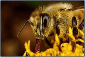 Ημερίδα Μέλισσας &περιβάλλοντος