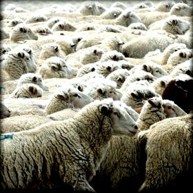 Σε άθλια οικονομική κατάσταση οι κτηνοτρόφοι στην Αρκαδία λόγωκαταρροϊκού