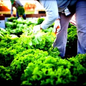 «Γίνε Αγρότης» στοTEDxAthens