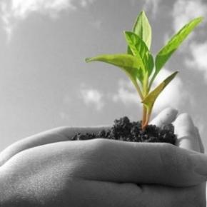 Η ΠΟΛΥΚΑΛΛΙΕΡΓΕΙΑ ως παράγοντας διασφάλισης του γεωργικούεισοδήματος