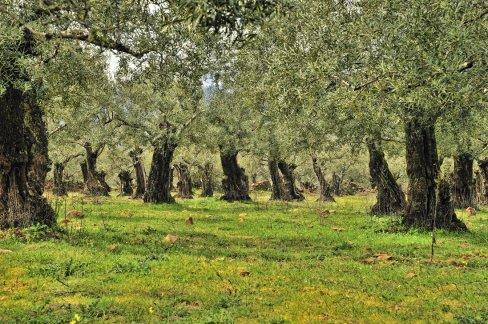 olive233