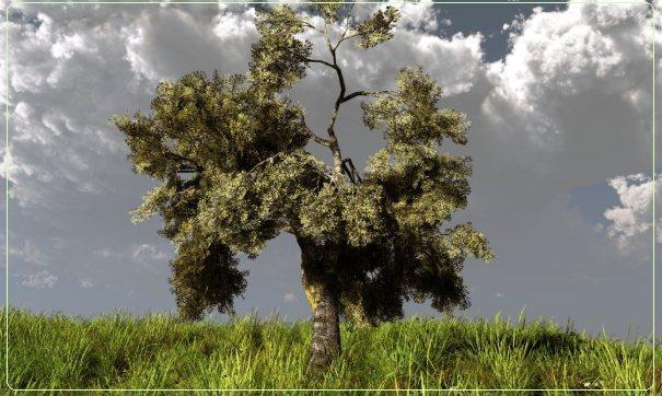 olive505