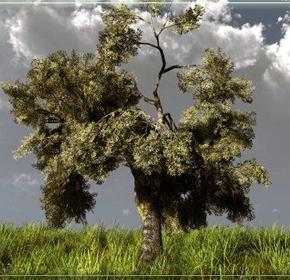 Kαταχώρηση πιστοποιημένων εκτάσεων Σκληρού Σίτου – Ελαιολάδου και Παραδόσεων Ελιάς – Άρθρο68