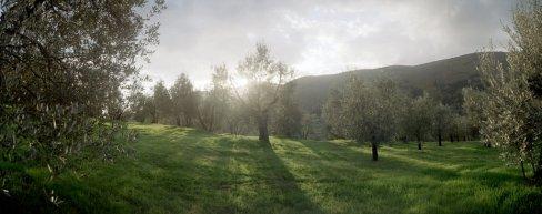 olivesun2